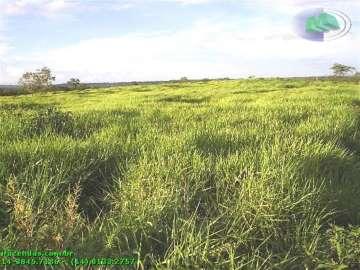 Cuiaba  CUIABÁ / MT 1008 Hect 1041