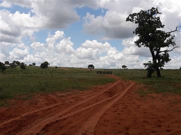 Fazendas Ribas do Rio Pardo/MS