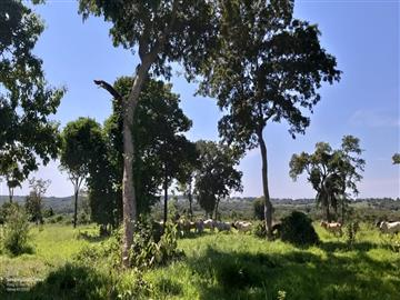 Fazendas Nioaque/MS