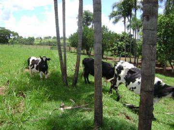 Fazendas Paranaiba/MS